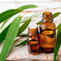WelnesScent Eucalyptus Essential Oil